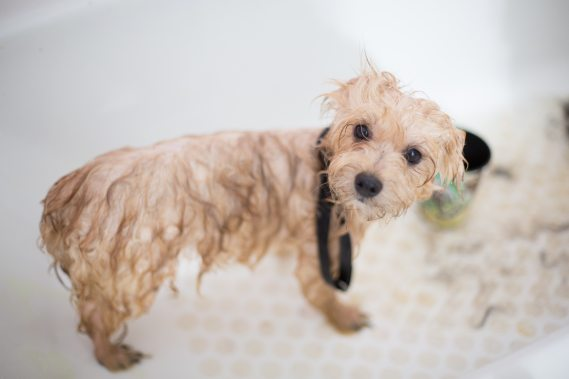 adorable-animal-bath-1436139